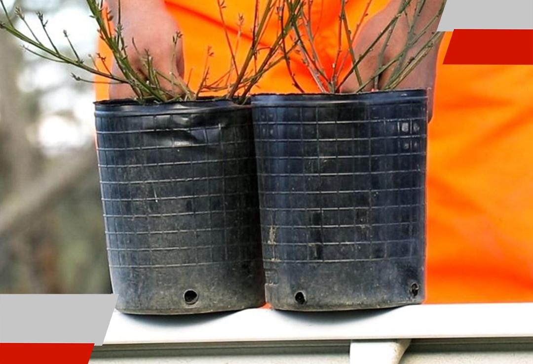 Entrega de semillas, plantines yárboles