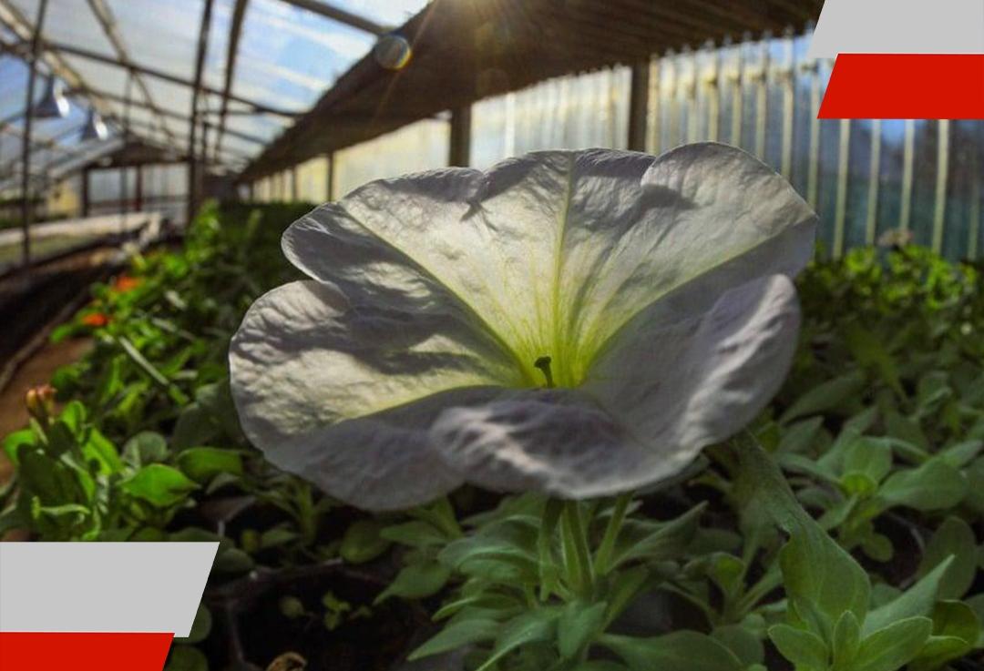 Se espera una producción de más de 300 mil plantines para el parquizado esteaño