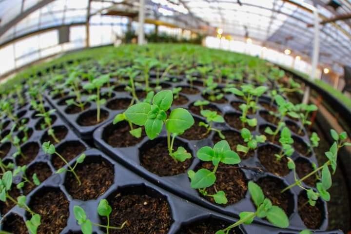 """Plantines 2021: Cronograma de entrega para productores inscritos en el Programa """"RGA AGRO PRODUCTIVO"""""""